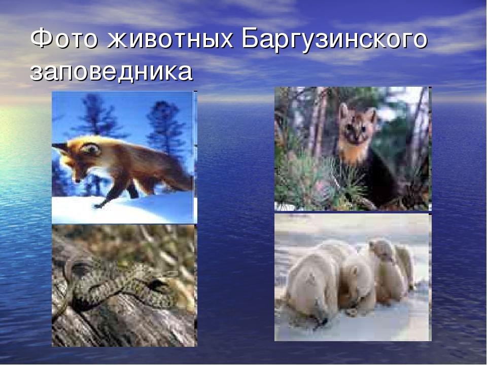 Фото животных Баргузинского заповедника