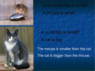 Is a mouse big or small? A mouse is small. Is a cat big or small? A cat is bi