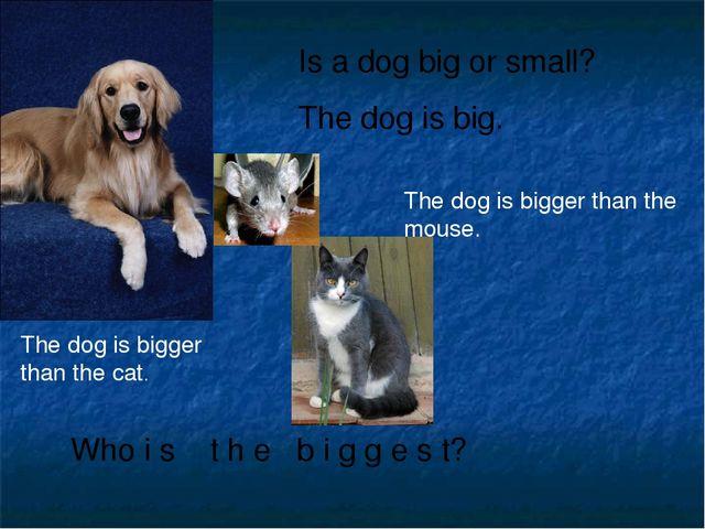 Is a dog big or small? The dog is big. Who i s t h e b i g g e s t? The dog i...