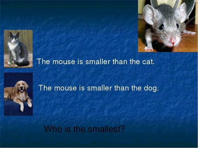 The mouse is smaller than the cat. The mouse is smaller than the dog. Who is...