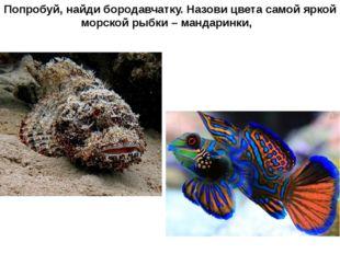 Попробуй, найди бородавчатку. Назови цвета самой яркой морской рыбки – мандар