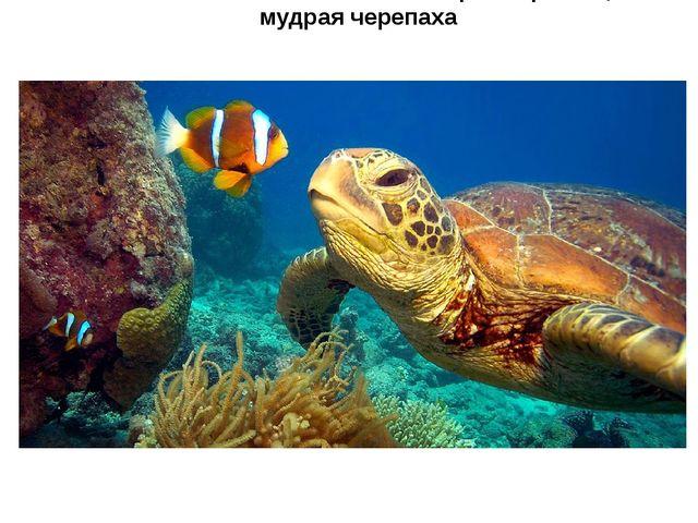 Расскажи нам о необычных морских рыбах, мудрая черепаха
