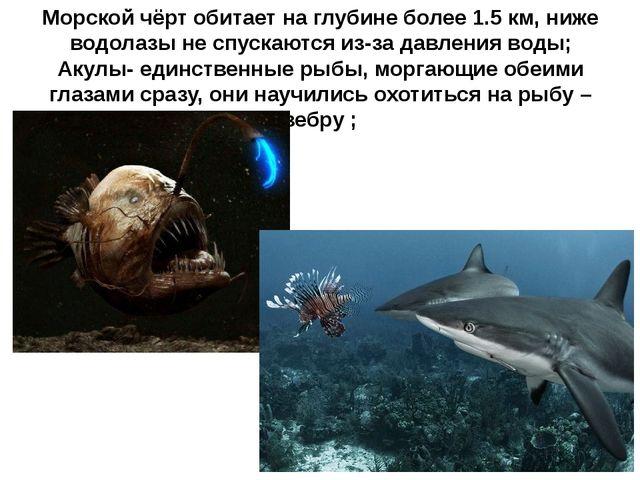 Морской чёрт обитает на глубине более 1.5 км, ниже водолазы не спускаются из-...