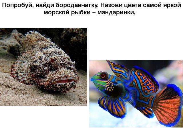 Попробуй, найди бородавчатку. Назови цвета самой яркой морской рыбки – мандар...