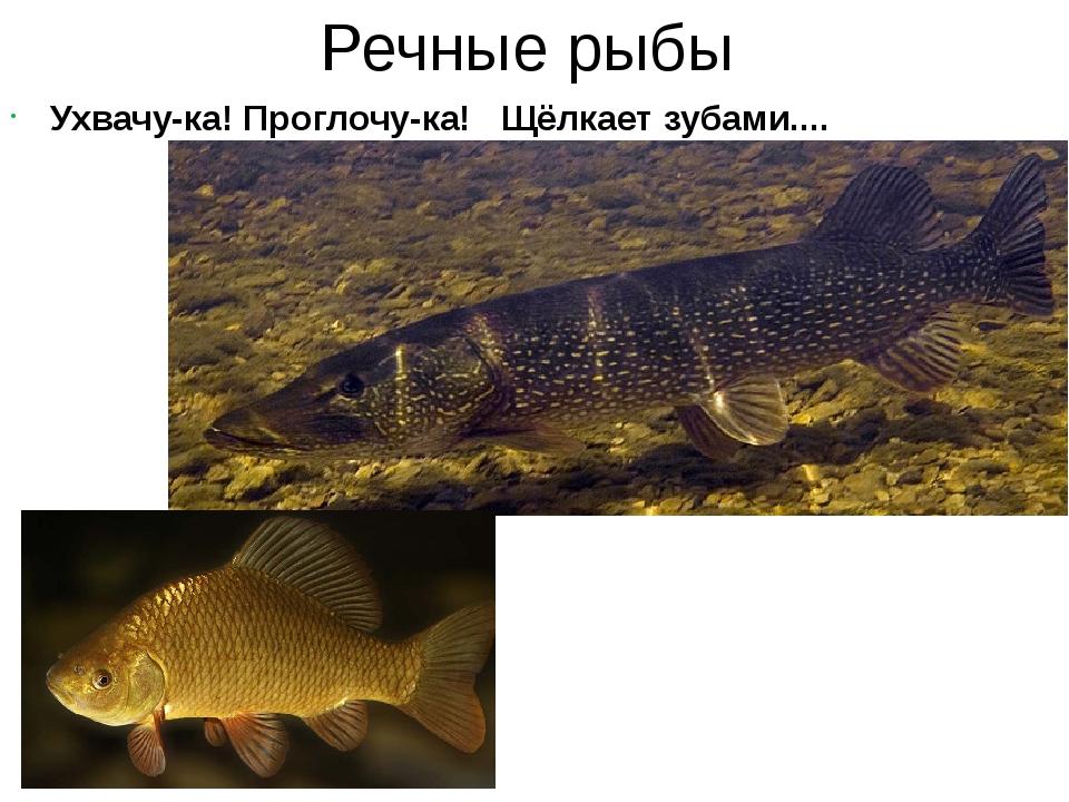 Речные рыбы Ухвачу-ка! Проглочу-ка! Щёлкает зубами.... От зубастых щук таясь...