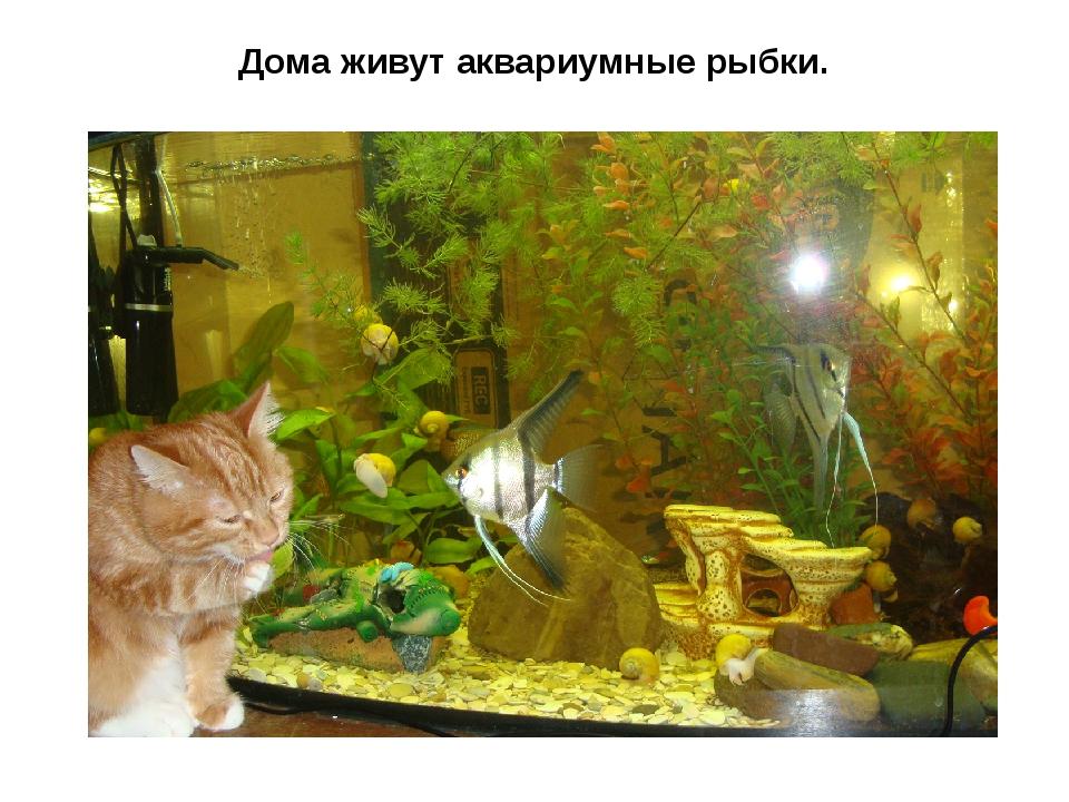 Дома живут аквариумные рыбки.