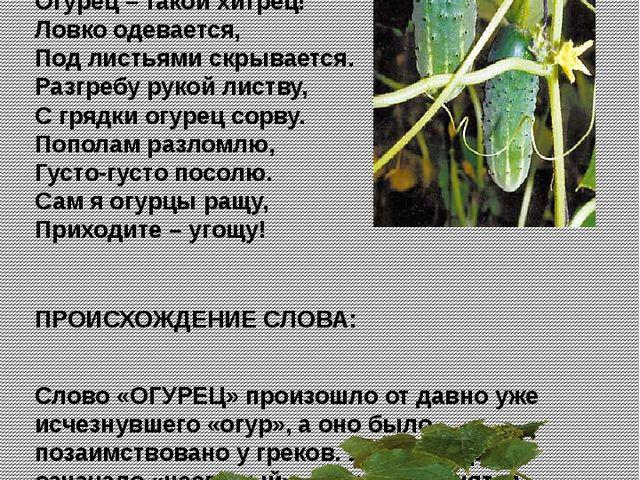 Огурец К. Тангрыкулиев Погляди на огурец, Огурец – такой хитрец! Ловко одева...