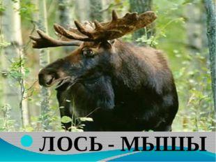ЛОСЬ - МЫШЫ
