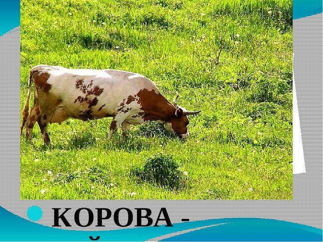 КОРОВА - ҺЫЙЫР