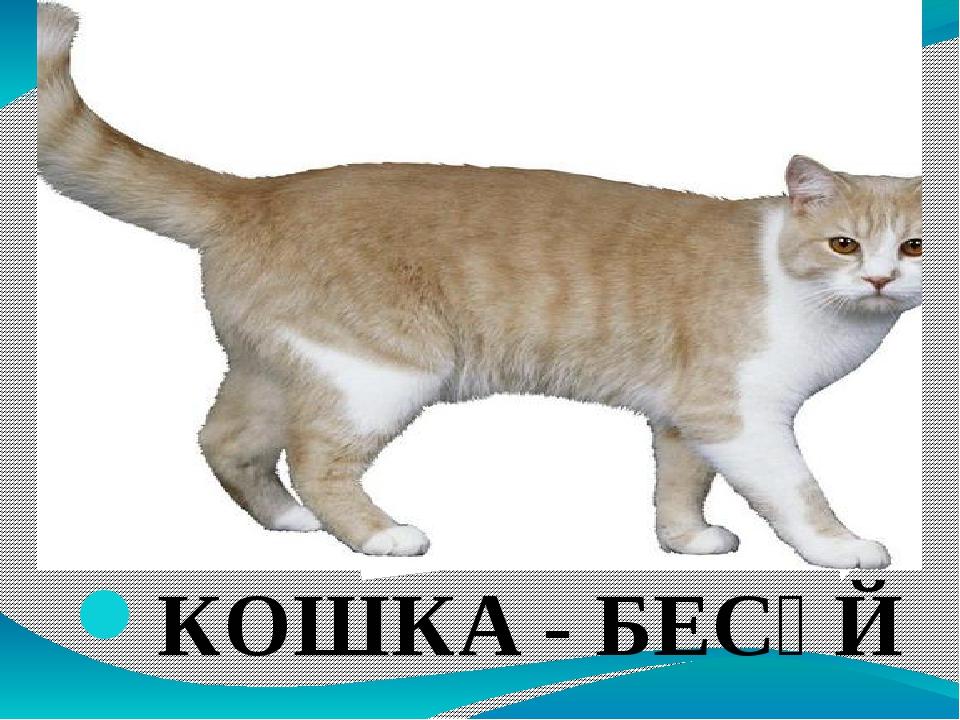КОШКА - БЕСӘЙ