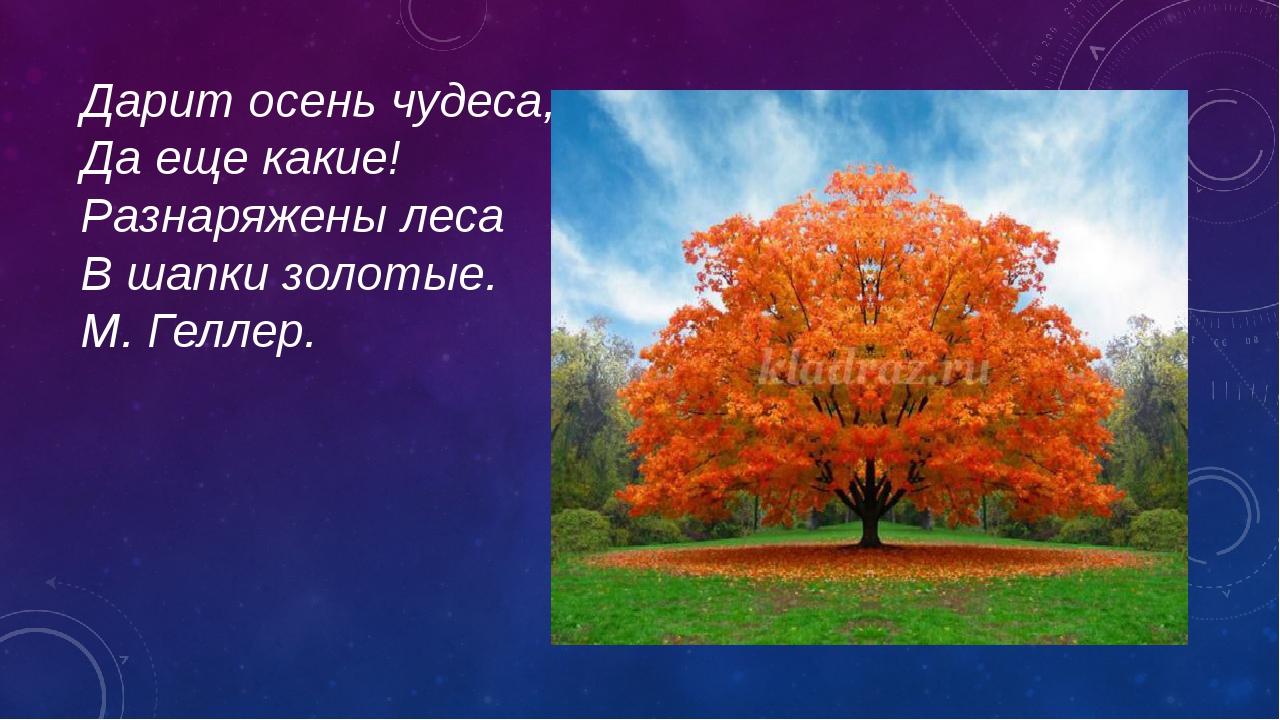 Дарит осень чудеса, Да еще какие! Разнаряжены леса В шапки золотые. М. Геллер.