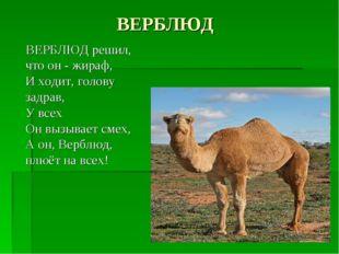 ВЕРБЛЮД ВЕРБЛЮД решил, что он - жираф, И ходит, голову задрав, У всех Он вызы