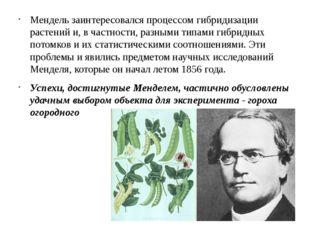 Мендель заинтересовался процессом гибридизации растений и, в частности, разны