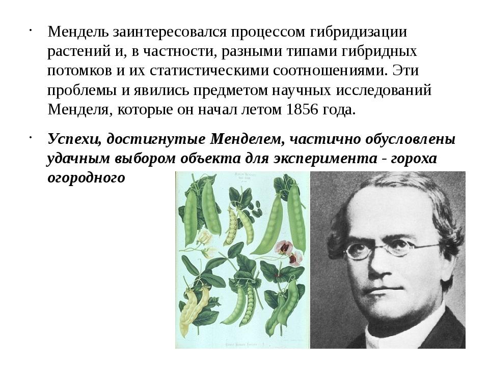 Мендель заинтересовался процессом гибридизации растений и, в частности, разны...