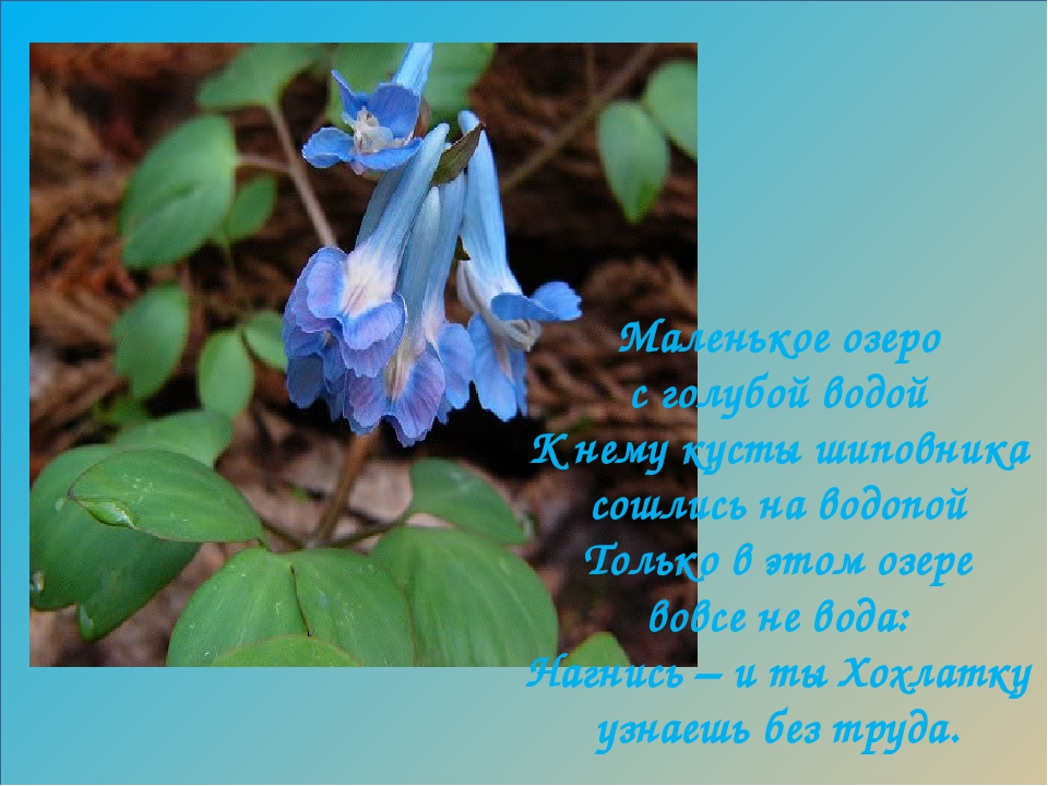 е е Маленькое озеро с голубой водой К нему кусты шиповника сошлись на водопой...