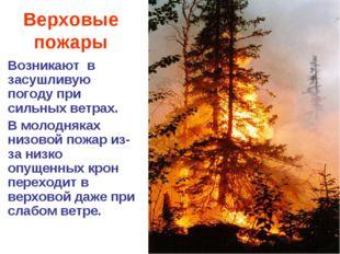 Верховые пожары Возникают в засушливую погоду при сильных ветрах. В молодняка