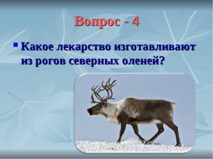 Вопрос - 4 Какое лекарство изготавливают из рогов северных оленей?