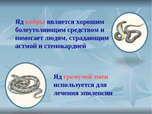 Яд кобры является хорошим болеутоляющим средством и помогает людям, страдающи