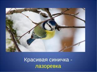 Красивая синичка - лазоревка