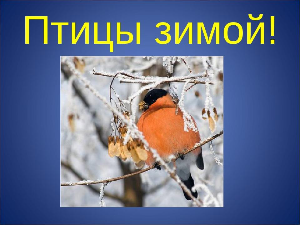 Птицы зимой!