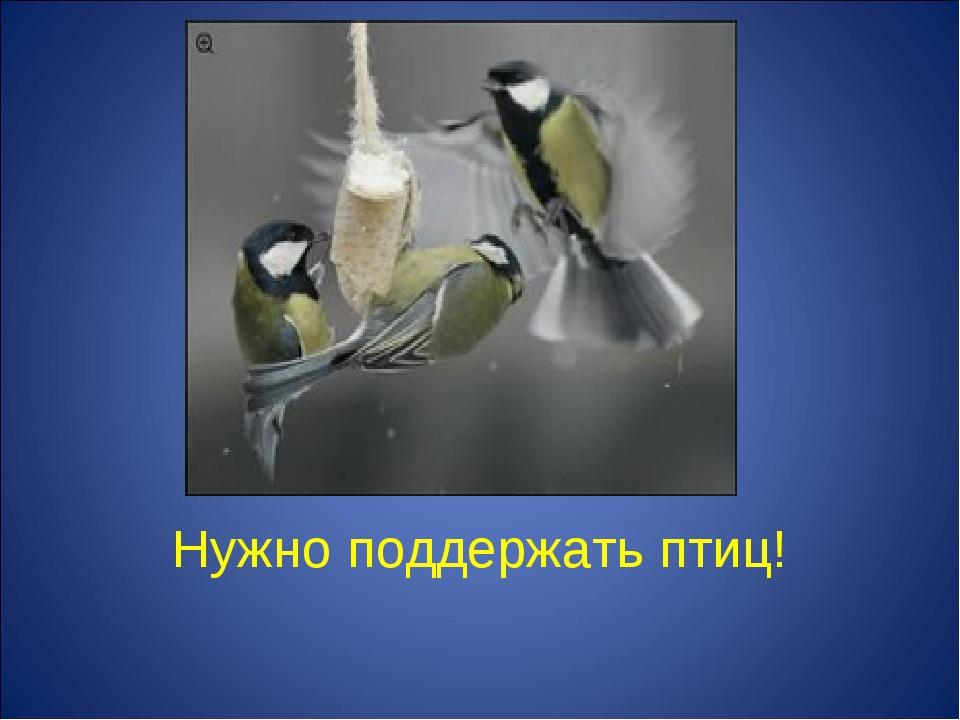 Нужно поддержать птиц!