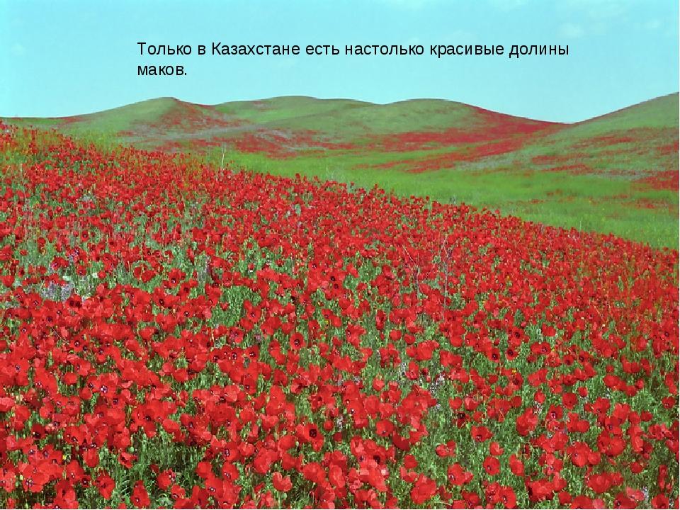 Только в Казахстане есть настолько красивые долины маков.