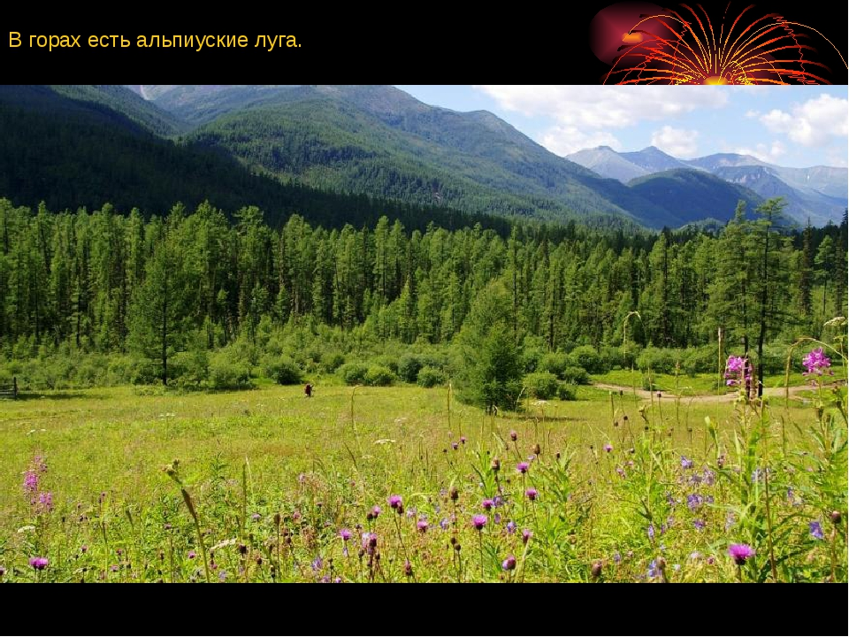 В горах есть альпиуские луга.