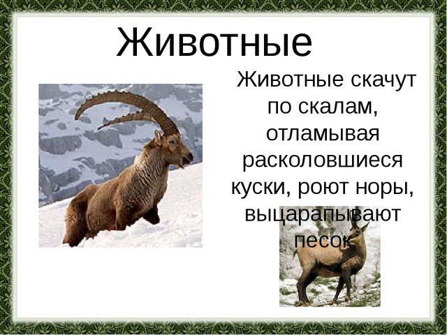 Животные Животные скачут по скалам, отламывая расколовшиеся куски, роют норы,...