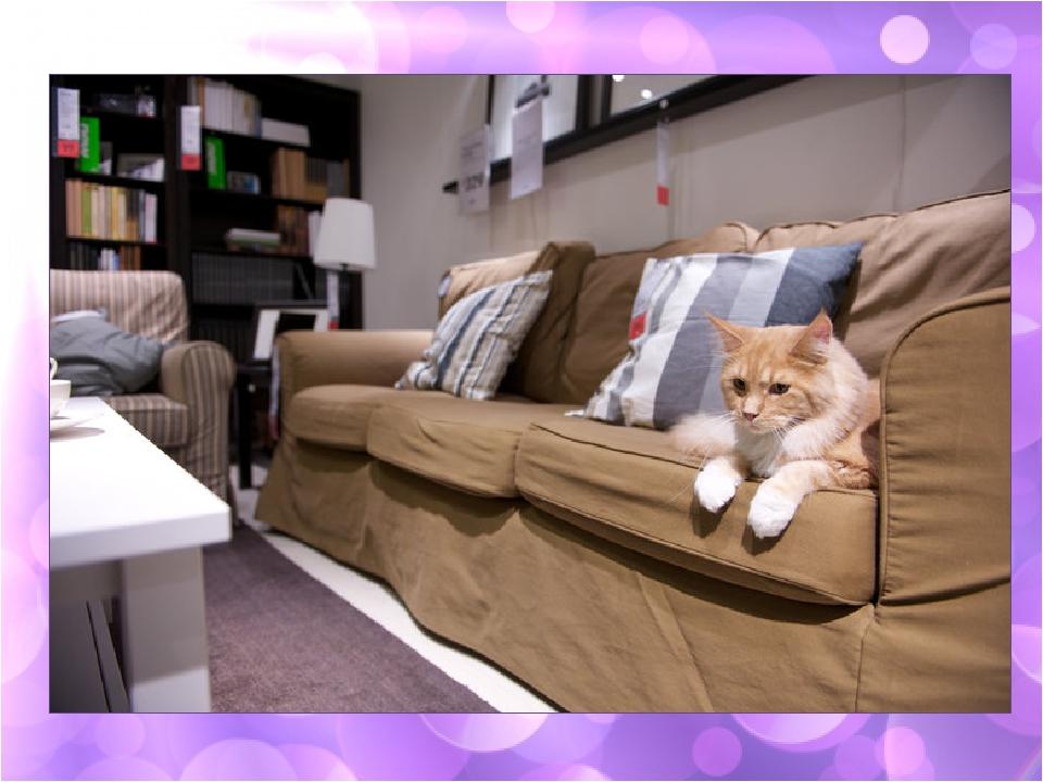 Фото кошки как в доме 2