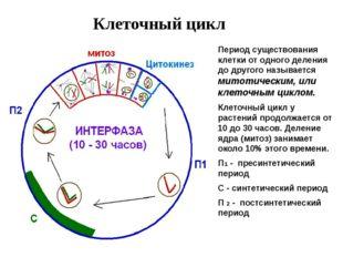 Клеточный цикл Период существования клетки от одного деления до другого назыв