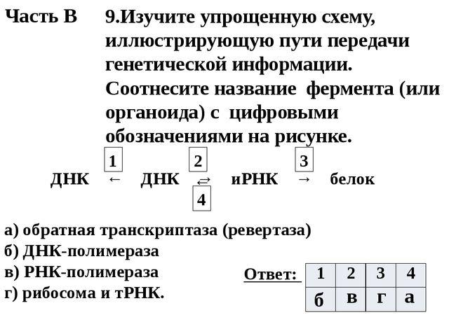 ← 4 Часть В 9.Изучите упрощенную схему, иллюстрирующую пути передачи генетиче...