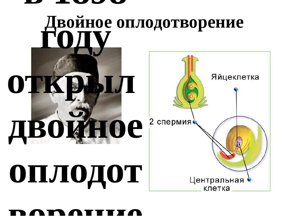 Двойное оплодотворение С.Г.Новашин в 1898 году открыл двойное оплодотворение...