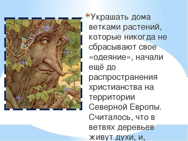 Украшать дома ветками растений, которые никогда не сбрасывают свое «одеяние»,...