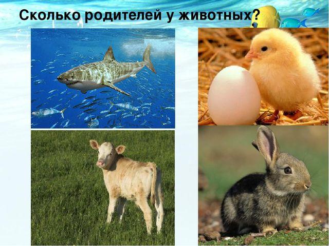 Сколько родителей у животных?