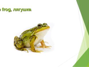 The frog, лягушка