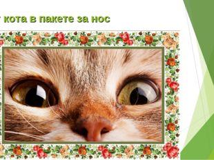 Тут кота в пакете за нос