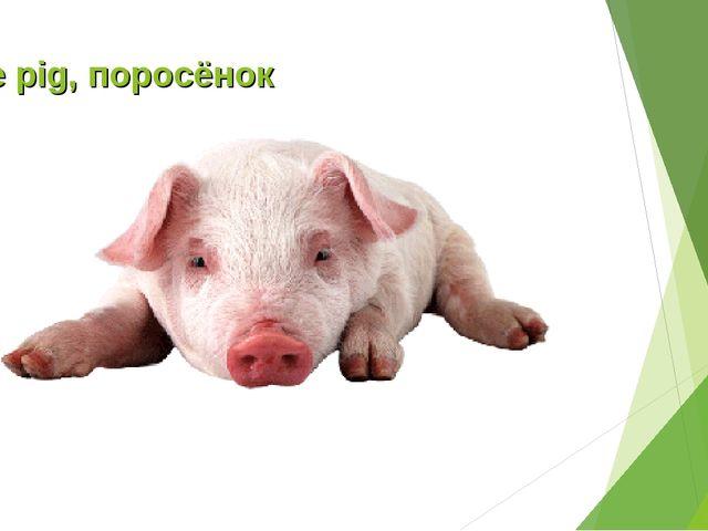 The pig, поросёнок