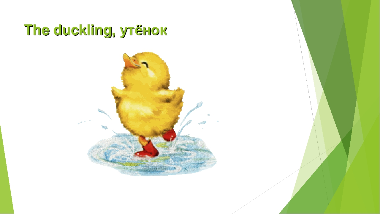 The duckling, утёнок