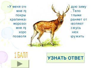 «У меня очень красивые рога, но каждую зиму мне приходиться их сбрасывать. Те