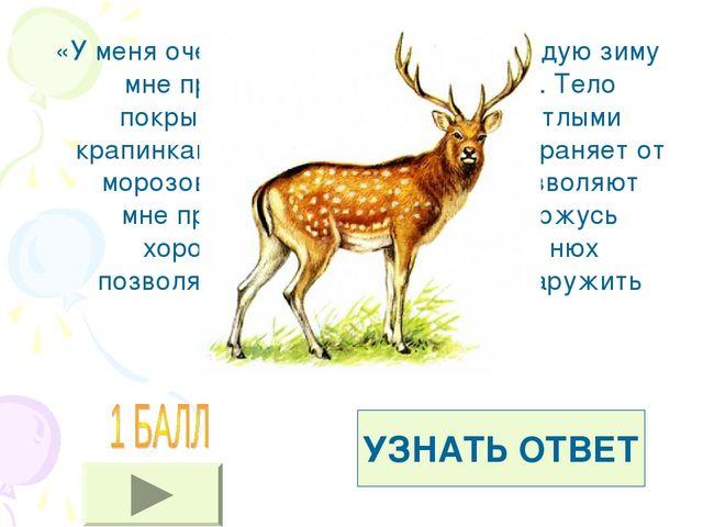 «У меня очень красивые рога, но каждую зиму мне приходиться их сбрасывать. Те...