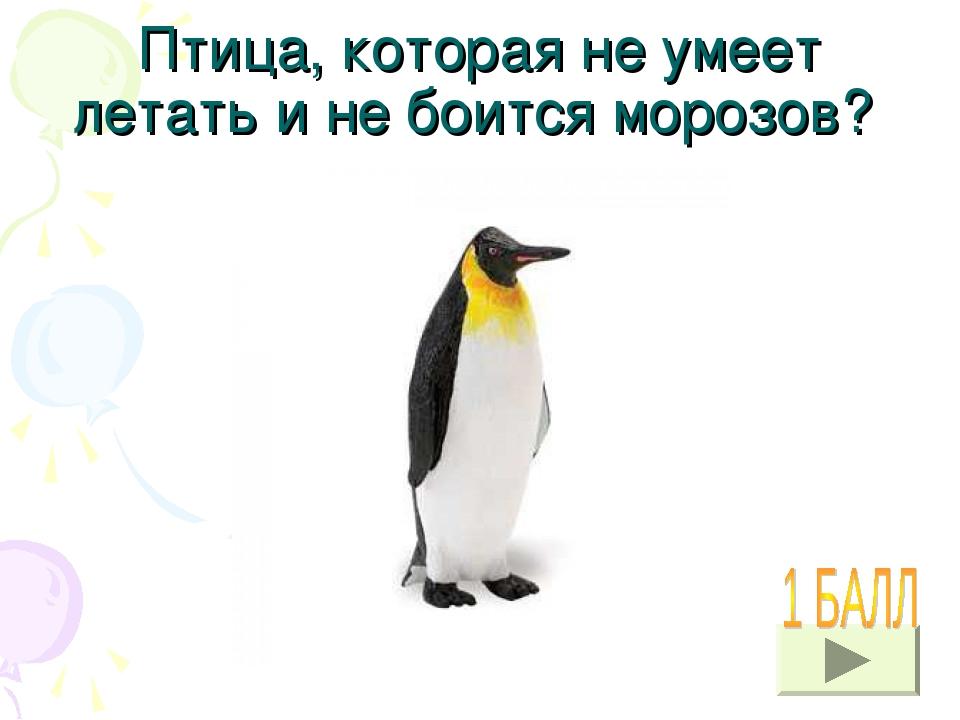 Птица, которая не умеет летать и не боится морозов? УЗНАТЬ ОТВЕТ