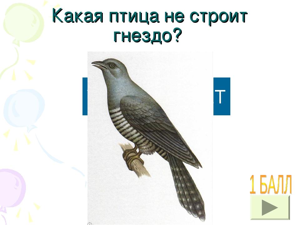Какая птица не строит гнездо? УЗНАТЬ ОТВЕТ