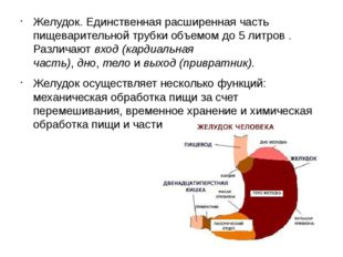 Желудок. Единственная расширенная часть пищеварительной трубки объемом до5 л