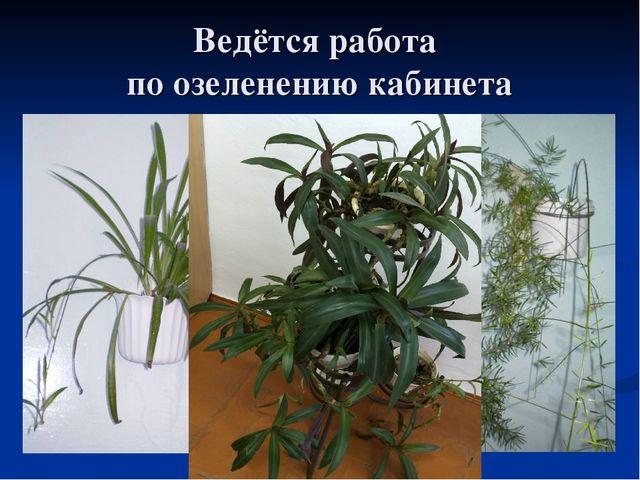 Ведётся работа по озеленению кабинета