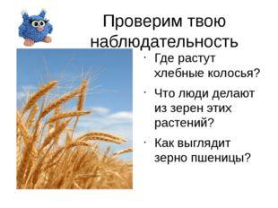 Проверим твою наблюдательность Где растут хлебные колосья? Что люди делают из