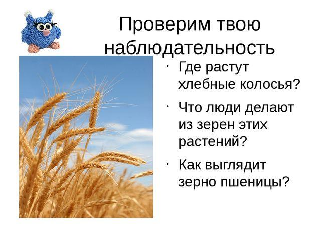 Проверим твою наблюдательность Где растут хлебные колосья? Что люди делают из...