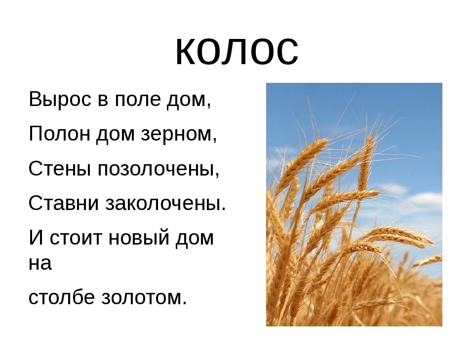колос Вырос в поле дом, Полон дом зерном, Стены позолочены, Ставни заколочены...