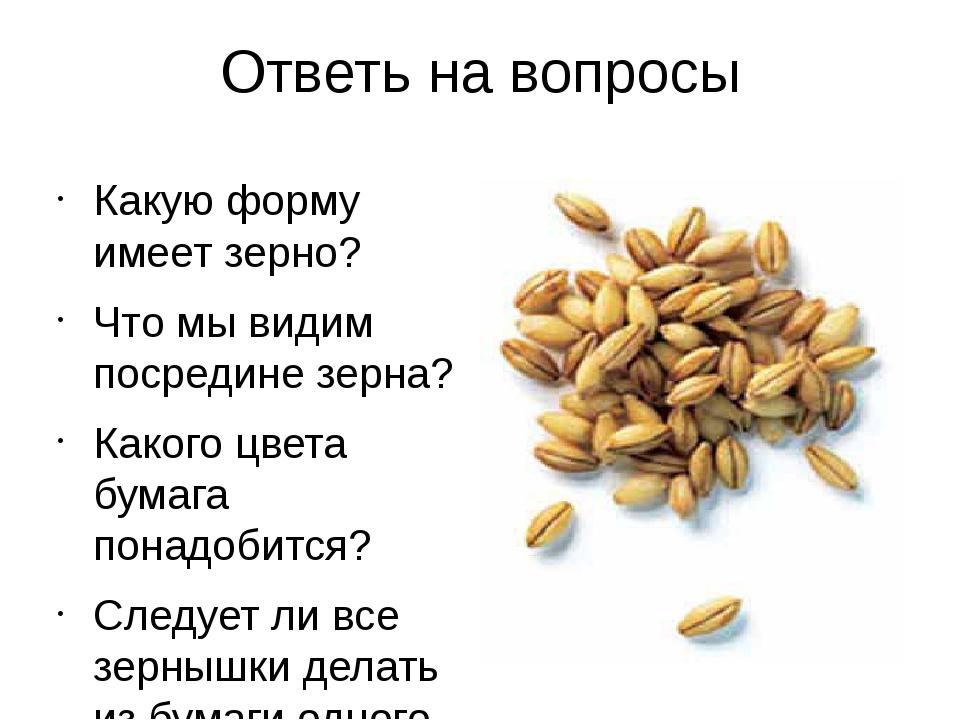 Ответь на вопросы Какую форму имеет зерно? Что мы видим посредине зерна? Како...