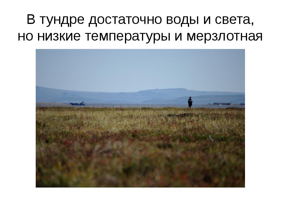 В тундре достаточно воды и света, но низкие температуры и мерзлотная почва