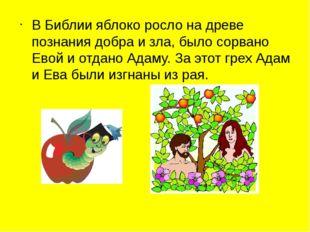 В Библии яблоко росло на древе познания добра и зла, было сорвано Евой и отда